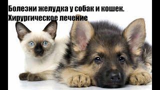 Болезни желудка у собак и кошек. Хирургическое лечение.