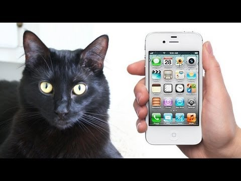 NEW iPhone made for CATS!
