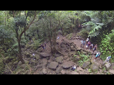 Manoa Falls By Drone
