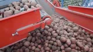 картофелеуборочный комбайн GRIMME LK650