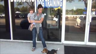 The K9 Training Academy In Sunrise Florida Reviews - Bijou