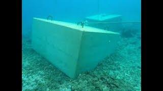 上條恒彦 - 珊瑚礁に何を見た