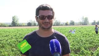 Agrokultura 7. listopada 2018.