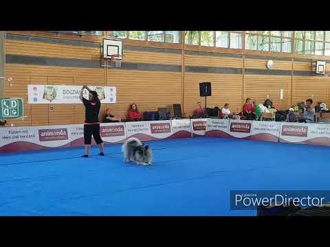 Dog Dance Turnier/ Dog Dancing/ wolfsspitz / Tricks/Trickdog