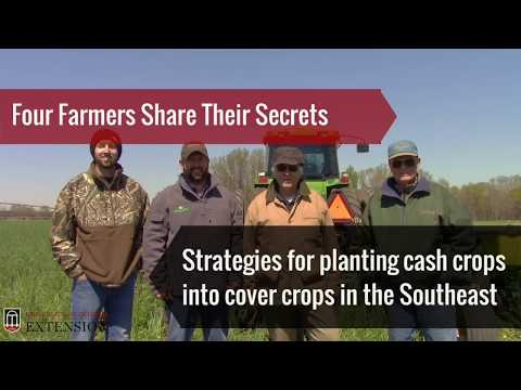 4 Farmers Share Secrets For Planting Cash Crops Into Cover Crops