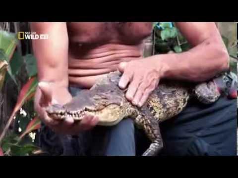 Documentary on the Deadly Crocodiles of the Nile River - Nile Crocodiles