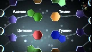 Виды нуклеиновых кислот