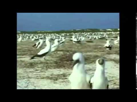 Arrecife Alacranes / Meet Alacranes Reef