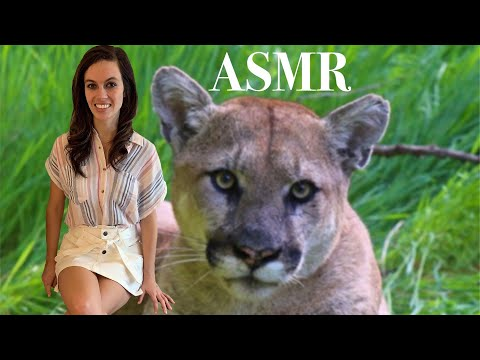 [ASMR] North American Animals (Top 5) – A Relaxing Lesson On Animals To Help You Fall Asleep