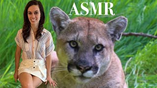 [ASMR] North American Animals (Top 5) - A Relaxing Lesson On Animals To Help You Fall Asleep