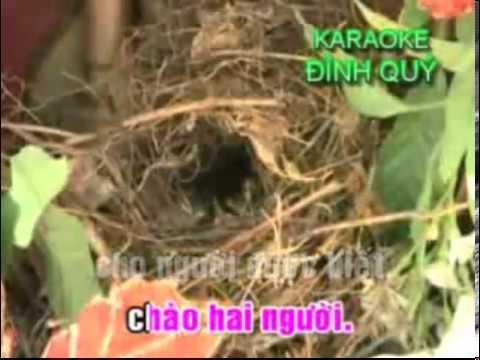 karaoke trich doan Tam Su Loai Chim Bien 3 - ca voi 545.mp4