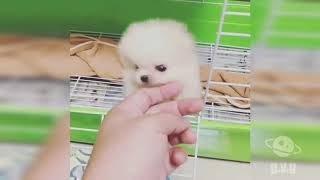En Tatlı Yavru Köpekler - Minik Köpekler - Hayvanlar Alemi 3