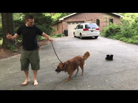 your-prong-collar-isn't-working-dog-still-pulling?-|-how-to-stop-leash-pulling-today.