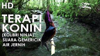 Gambar cover TERBARU HD TERAPI STRESS KONIN KOLIBRI NINJA + SUARA ALAM & BETINA KOLIBRI