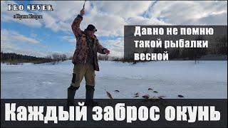 Рыбалка на окуня Рыбалка Поклевка за поклевкой Жор окуня