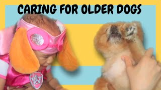 What to expect with an aging dog | putting dog to sleep ?