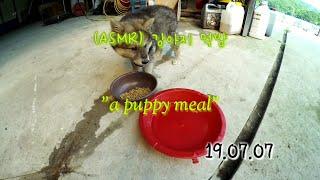 (ASMR) 강아지 먹방