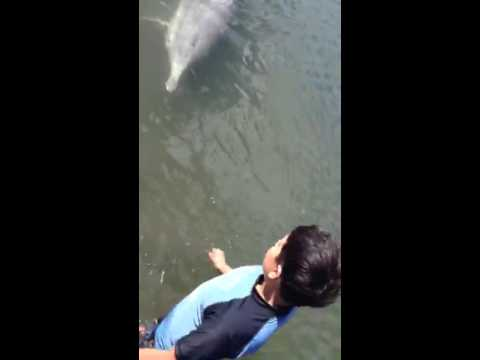 Friendly wild dolphins wants to play