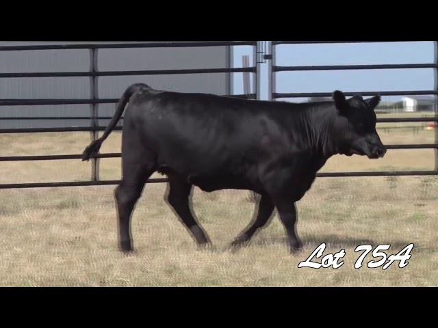 Pollard Farms Lot 75A