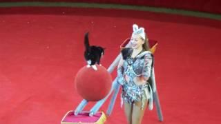 Кошки. Цирк. Цирковой котёнок на шаре. Cats. Circus. Circus kitten on the ball.