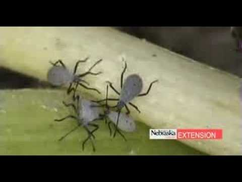 Common Garden Insects - YouTube