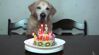 2013 .03.27はムックの誕生日。ケーキを作ってあげました。ラムの時は大...