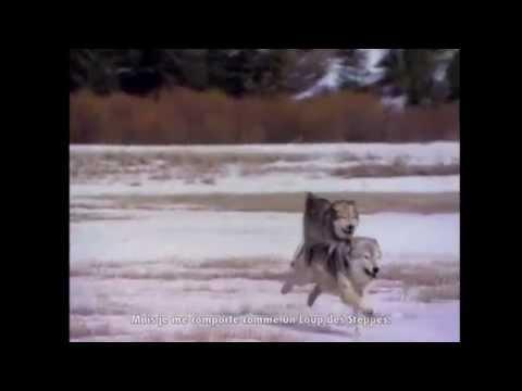 Le Loup Des Steppes De Hermann Hesse à Lonepsi Raplume