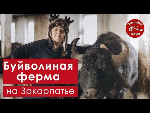 """Буйволиная ферма """"Райский"""