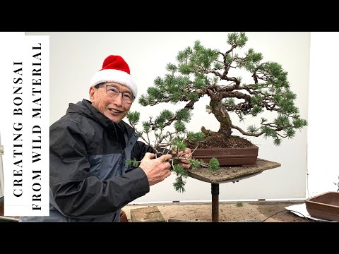 How to think when making Bonsai