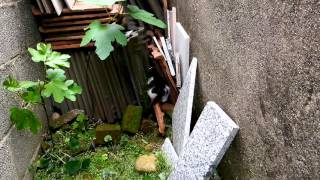 Пьяний кот после валерьянки не знает где он