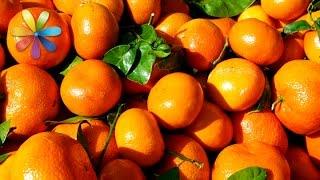 Как выбрать безопасные и вкусные мандарины – Все буде добре. Выпуск 724 от 17.12.15