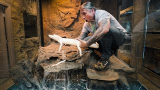 ALBINO ALLIGATOR GETS HUGE NEW HOME AT MY RETILE ZOO!! | BRIAN BARCZYK