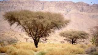 Manajah Presents : Algeria