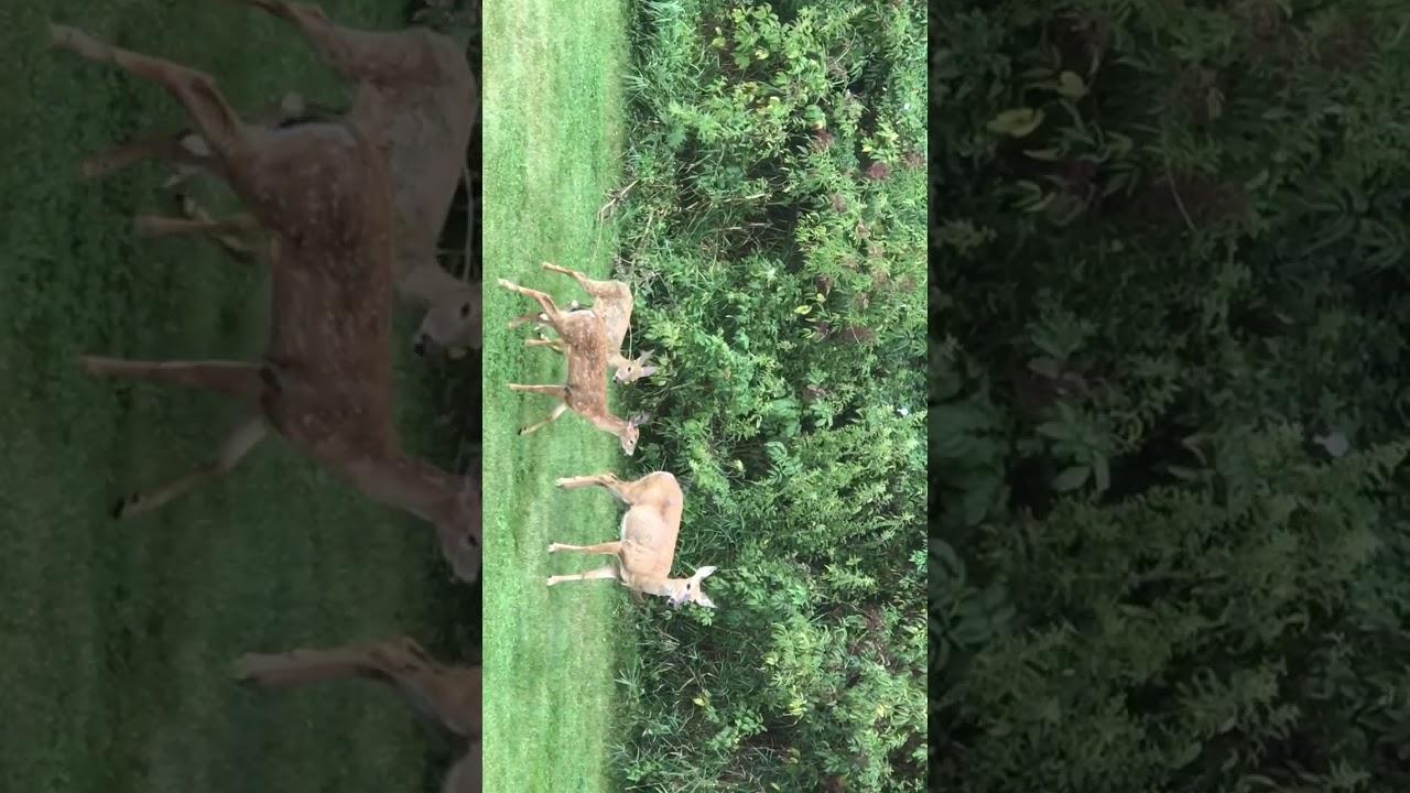deere in our backyard 2017 youtube