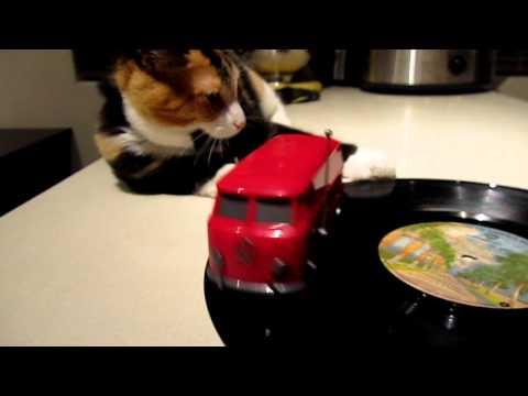 Mittens the cat vs. Soundwagon Bus