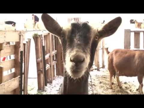 NO KILL FARM in Colorado is changing the way we see animals