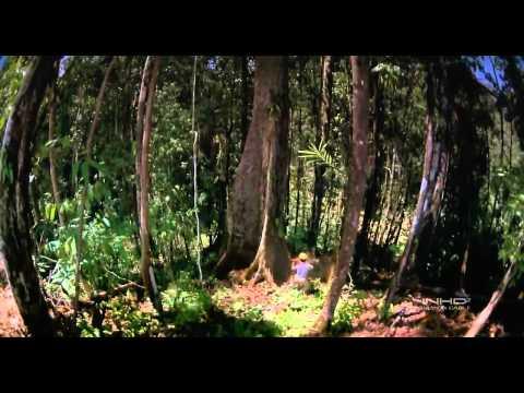 Rừng mưa nhiệt đới - Tropical Rainforest.