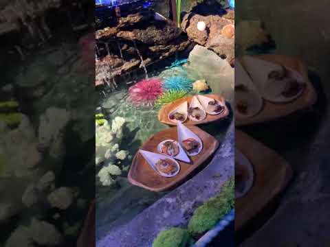 Exploratorium Showcase Event Interactive Food Stations