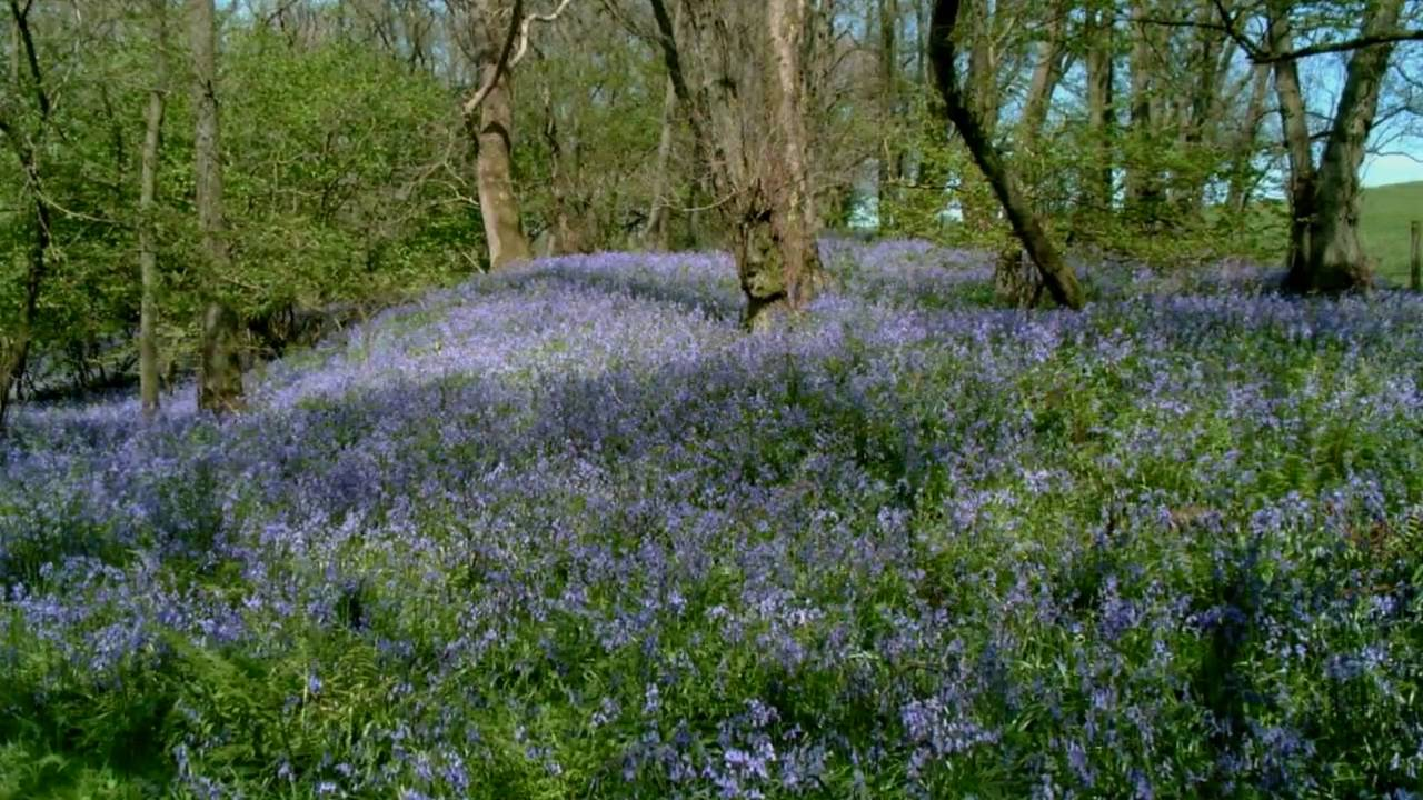 Spring wild flowers of britain ireland youtube mightylinksfo Image collections