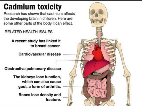 how to get rid of cadmium in the body