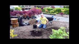 Japanese Maple planting at Select Maples