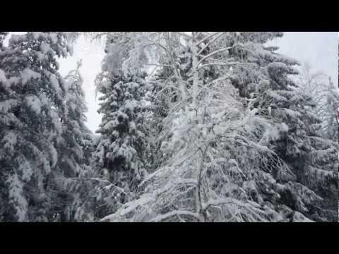 Зимняя сказка леса