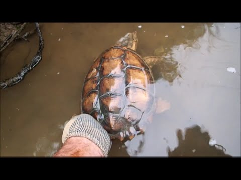 Thumbnail: Metal Detecting & Magnet Fishing: Nokia Phone, Snapping Turtle, Shopping Carts And Trash.