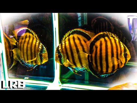Wild Cool And Crazy Rare Fish! | Dean Tweedles Fish Room Tour