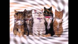 Смешные и просто красивые фотографии кошек. (Funny and just pretty pictures of cats)