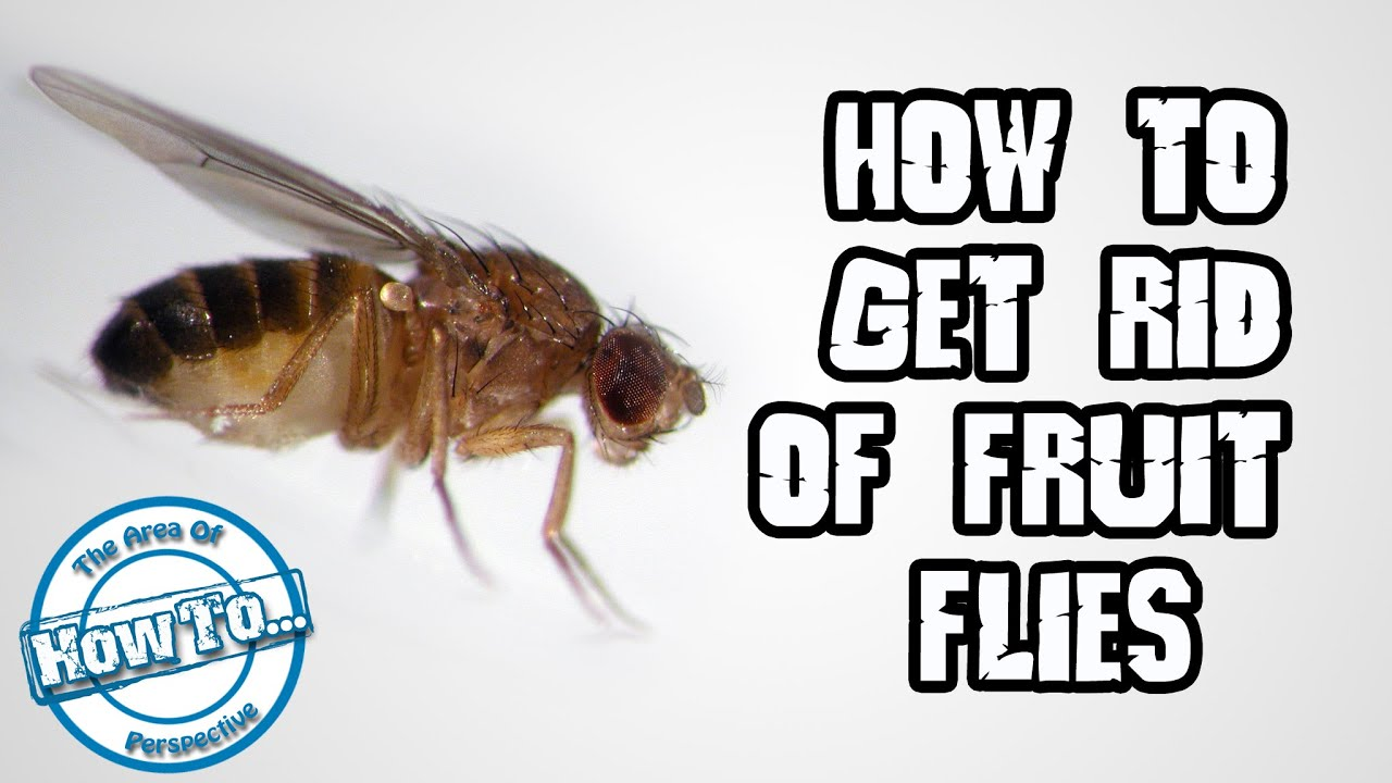 how to avoid flies in the house