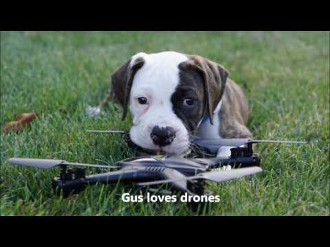 Half Chrome: Drones, Puppies and Kittens, Why Not?