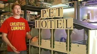 Small Pet Boarding (Pet Hotel London)