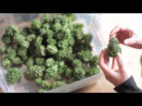 El gramo de marihuana oficial costar� algo m�s de un d�lar