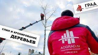 видео Вырубка аварийных деревьев в Москве